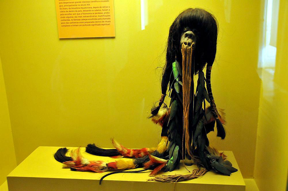 Das Bild von einem Schrumpfkopf der Shuar. Dieser Schrumpfkopf hängt vor einer gelben Wand. Er hat einen Mit langen Faäden zugenähten Mund, und mit vielen buntern Federn geschmücktes Haar.