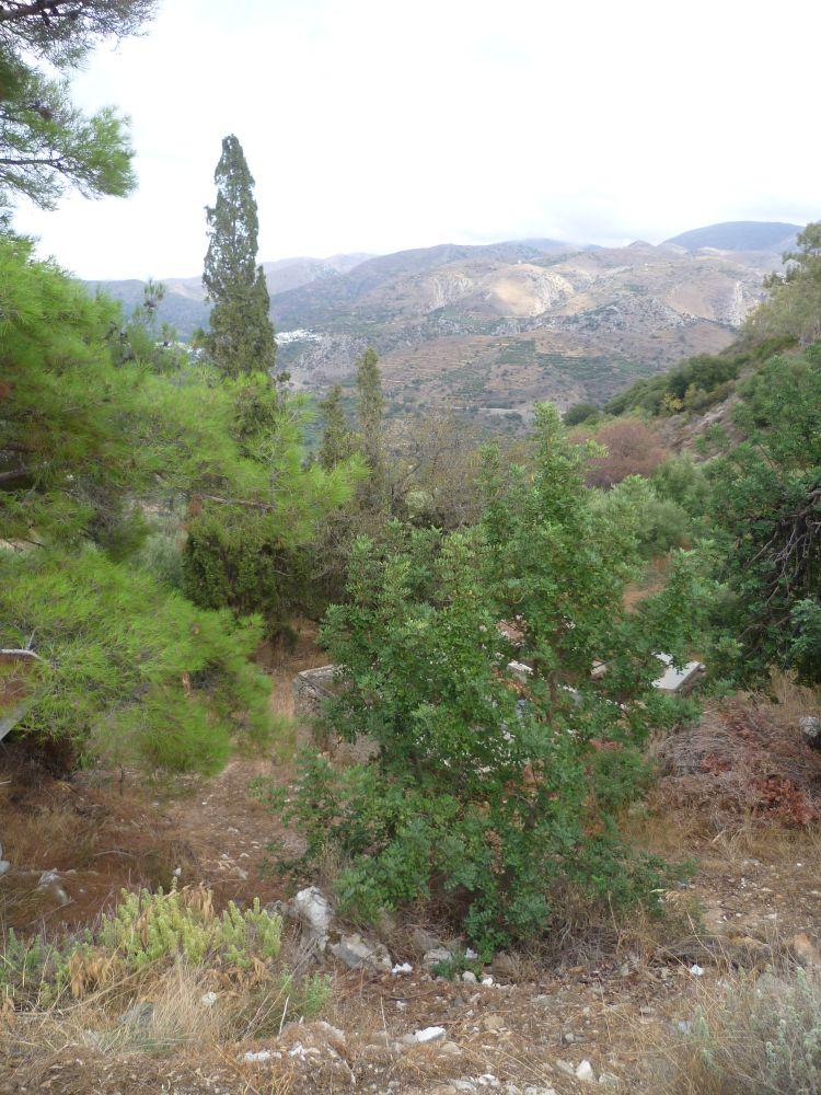 Blick in eine bergige grüne Landschaft
