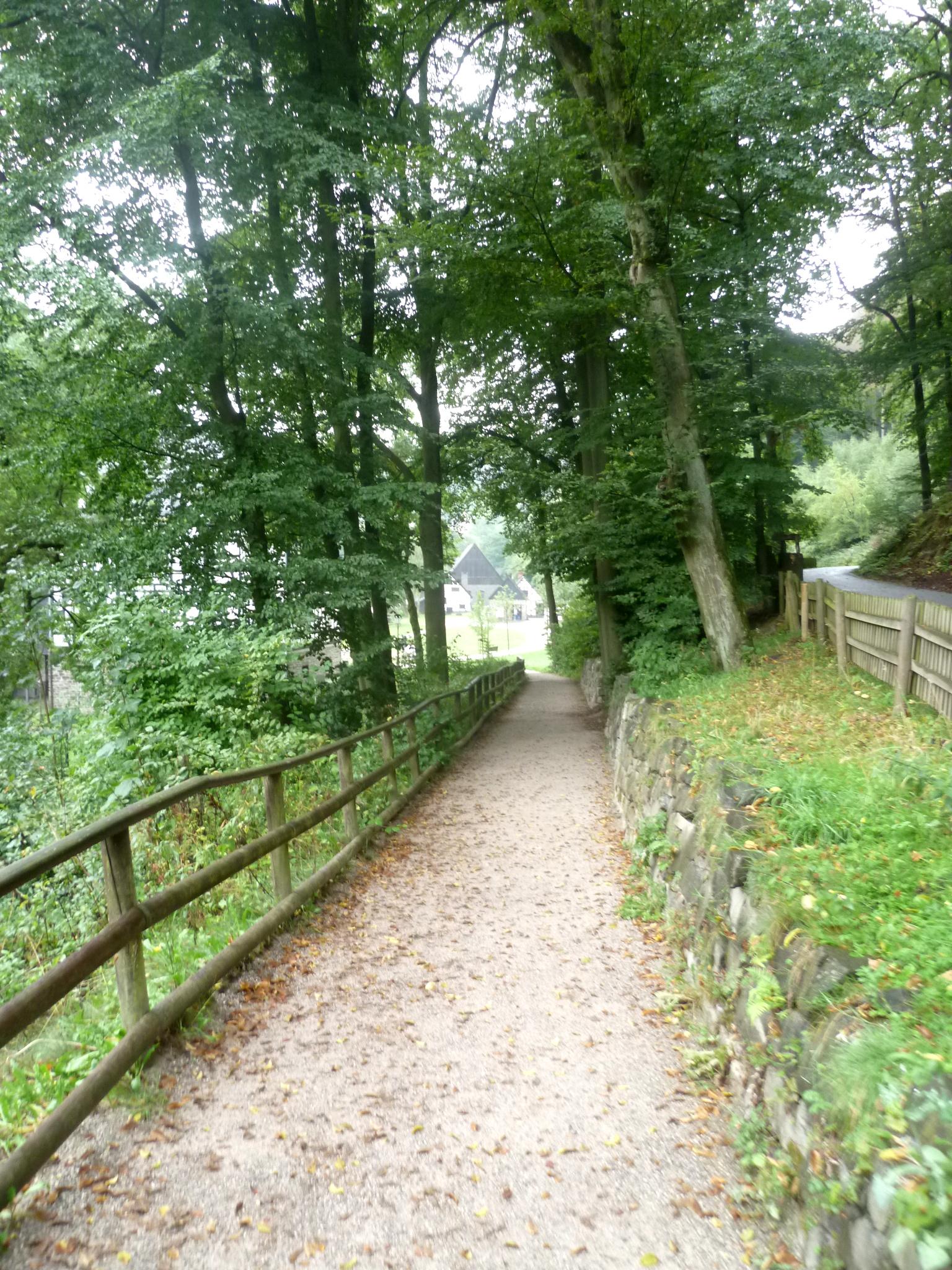 Ein Sandweg zwischen grünen Bäumen und Büschen.