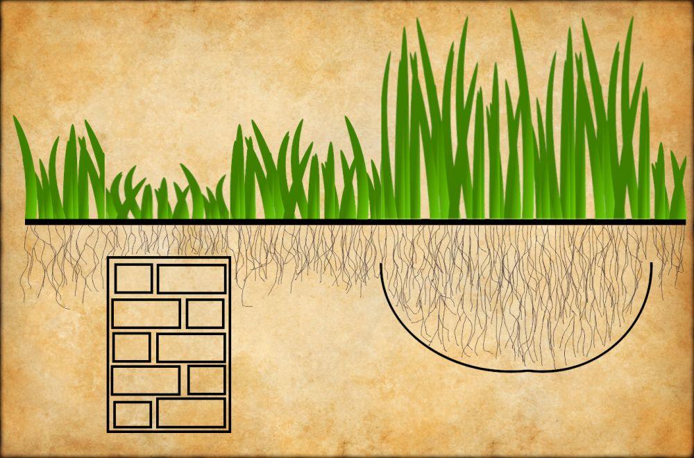 Eine schematische Darstellung von Bodenbewuchs. Pflanzen mit ihren Wurzeln im Boden werden gezeigt. Im Boden steckt an einer Stelle eine Mauer. Dort wurzeln die Pflanzen nicht so tief und die Pflanzen sind niedrig. In einer Kuhle Wurzeln die Pflanzen ganz tief und sie gedeihen deswegen besser. Das ist die Grundlage auf der Luftbildarchäologie funktioniert.