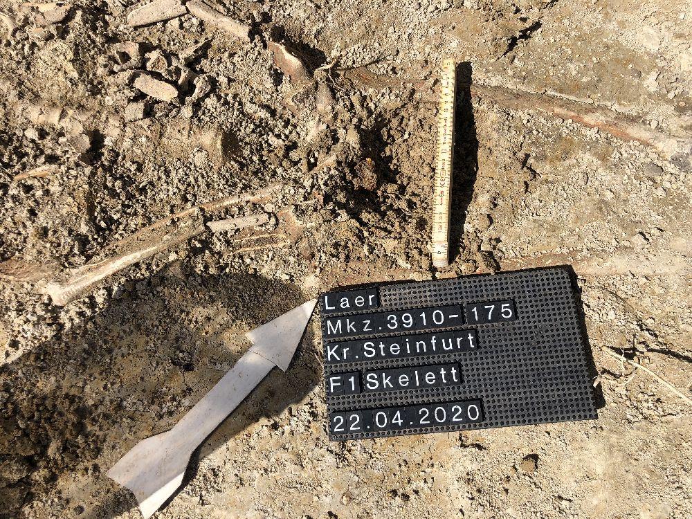 Ein Insitubild es Knochenfundes in Laer. Die Knochen liegen in der Erde, eine Fundtafel und ein Nordpfeil sind Plaziert, sowie ein Zollstock der die Größe anzeigt.