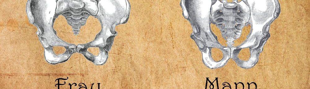 Zeichnungen eines Beckens einer Frau und eines Mannes nebeneinander gestellt.