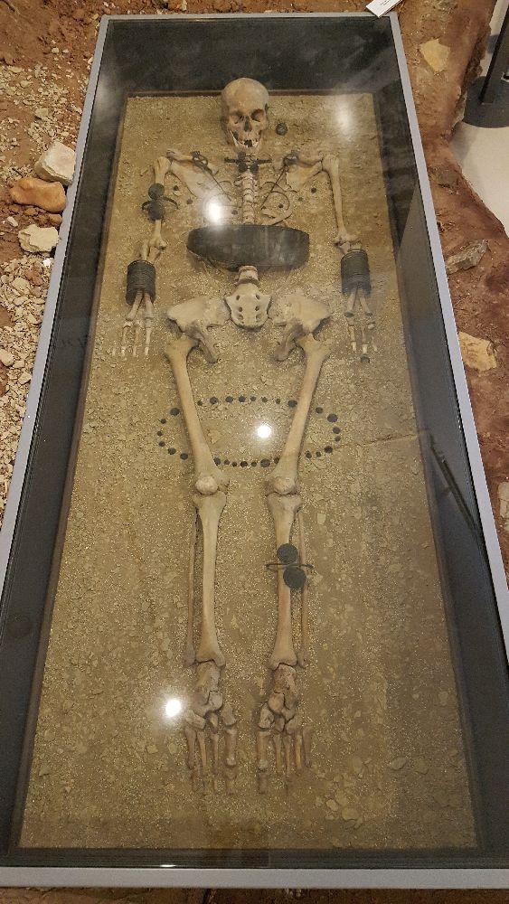 Eine Rekonstrucktion der Grabausstattung des brozezeitlichn Grabes Von Molzbach. Die Knochen der Frau sind in einer Vitrine Ausgelegt, ud die Grabbeigeben an andsprechenden Stellen plaziert.