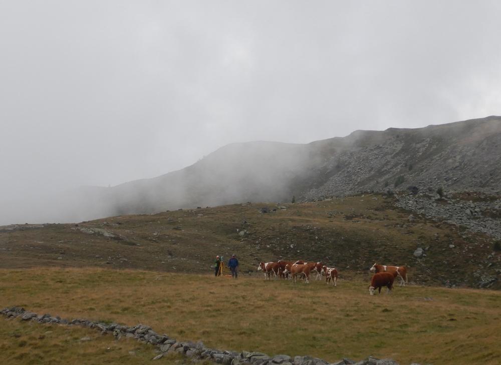 Eine Alpenlandschaft die halb im Nebel versinkt. Auf der Ferne Kommen Kühe über eine Grüne Wiese auf einem Hochplateu gelaufen.