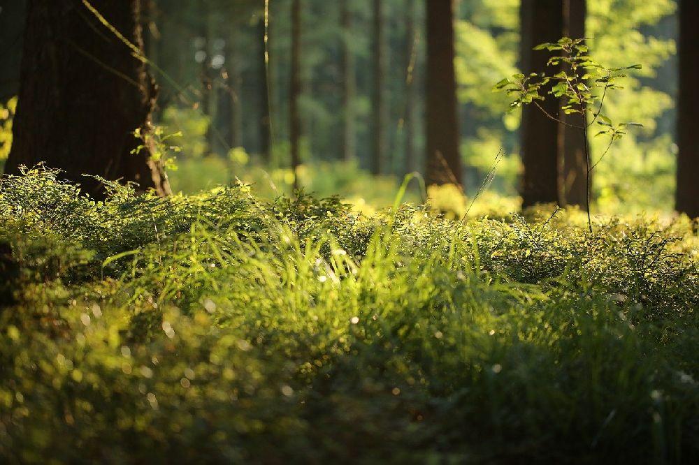 Moos auf Waldboden