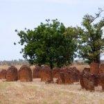 Tür 17: Steinkreise von Wassu - Westafrikas Megalithen