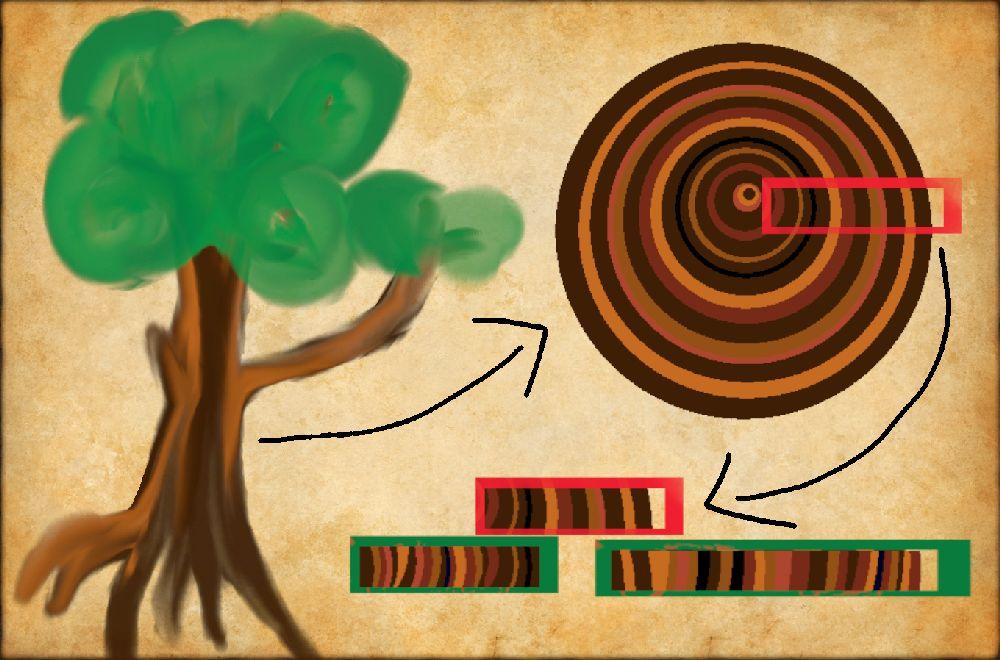Eine Grafik auf einem Pergament. Ein Baum, ein Pfel zeigt zu einer Baumscheibe aus seinem Stamm. Hier sind ein Paar Baumringe markiert. Ein pfeil zeigt diese Sortiert zwischen zeit anderen Baumringproben.