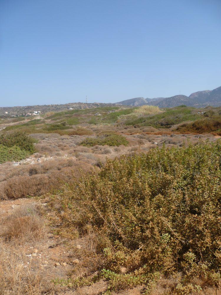 Eine Landschaft mit halbverdörrten grünen Pflanzen auf Roten Sandhügel, im Hintergrund Berge