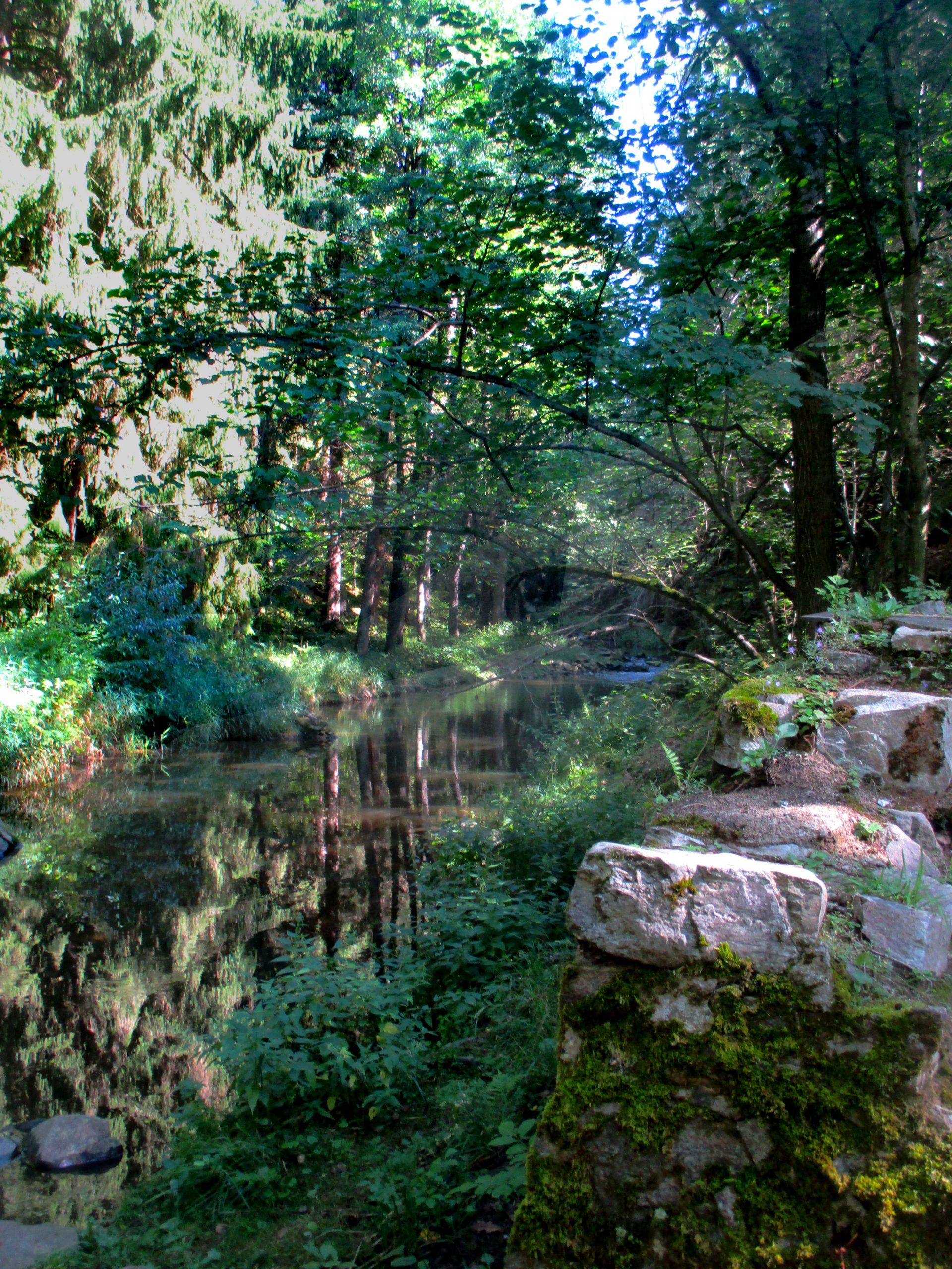 Ein Cah durchfießt einen Wald, die Bäume Spiegeln sich im Wasser